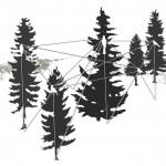 bird-triangulation